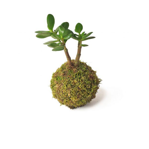 Jade mini