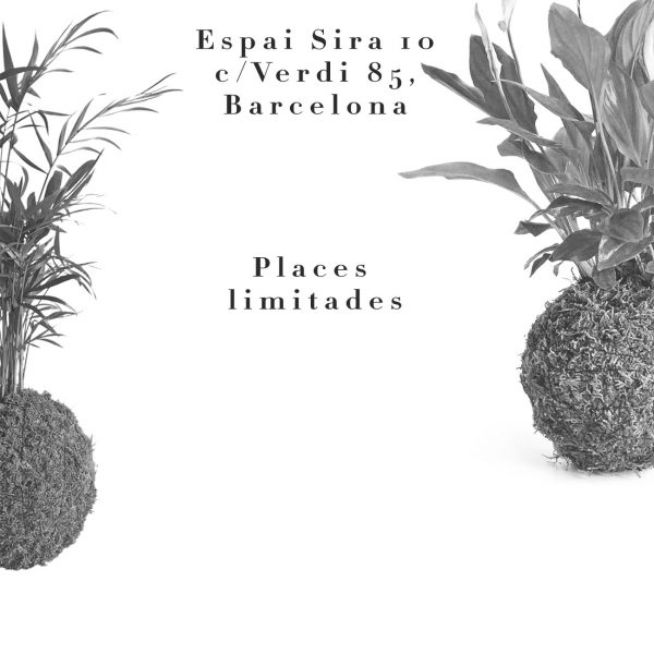 Taller de kokedamas en Barcelona