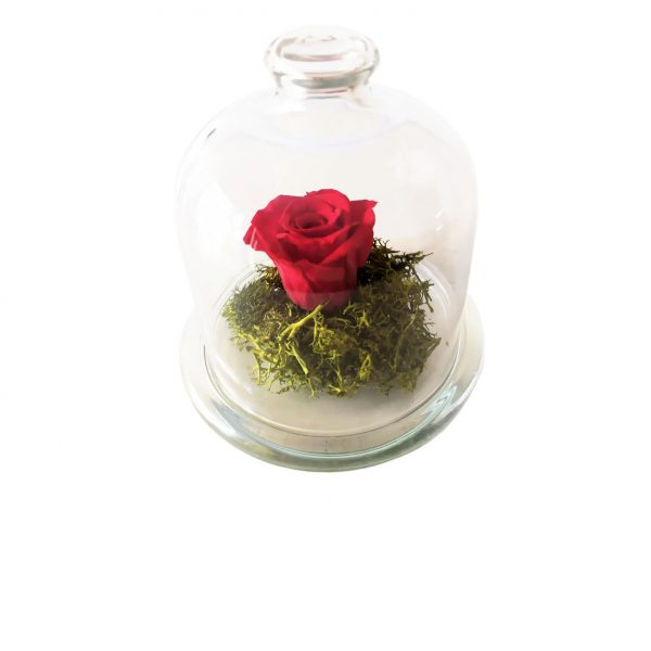 Rosa Preservada Minicúpula