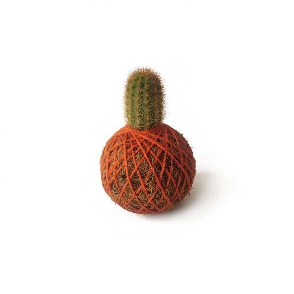 Cactus Saga en mini kokedama