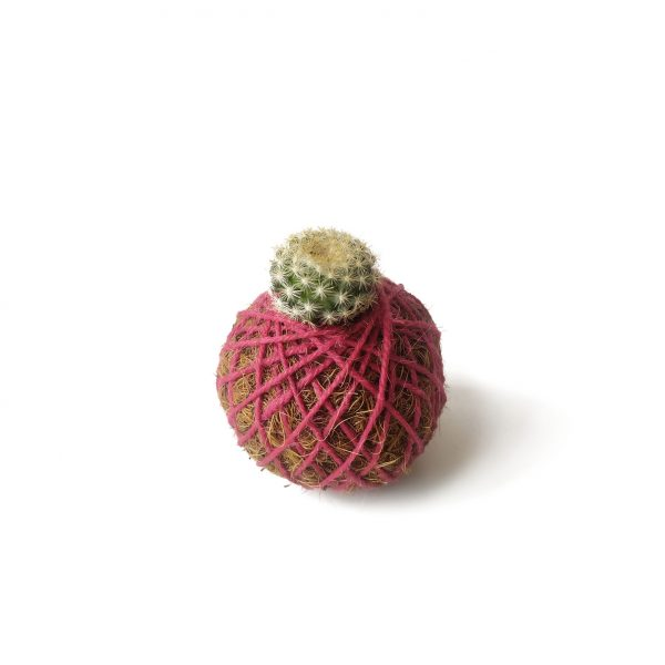 Cactus Jord en mini kokedama
